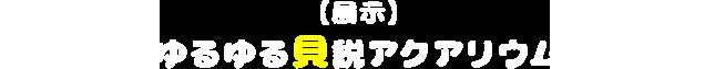"""【展示】ゆるゆる"""" 貝""""説アクアリウム"""